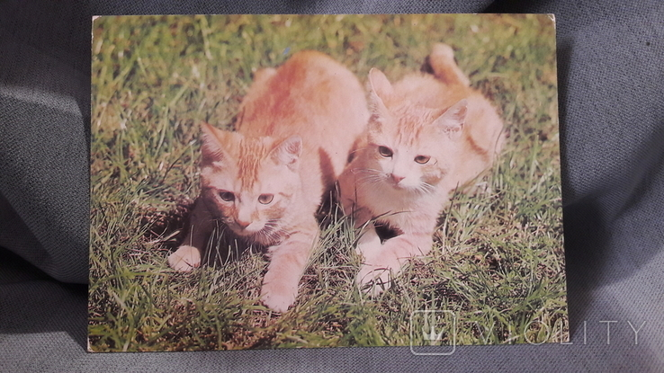 Открытка. Кошка, кот, котенок., фото №2