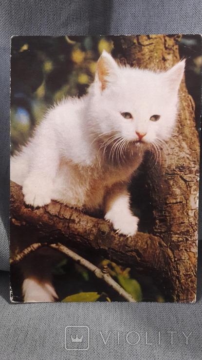 Открытка. Кошка, кот, котенок, фото №2