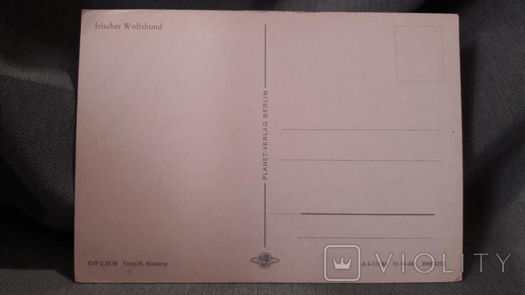 Открытка. Planet - Verlag Berlin.  Ирландский волкодав, фото №3