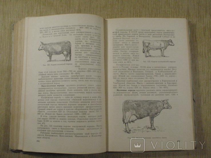 Товароведение пищевых продуктов. 1956 г. Военная академия., фото №7