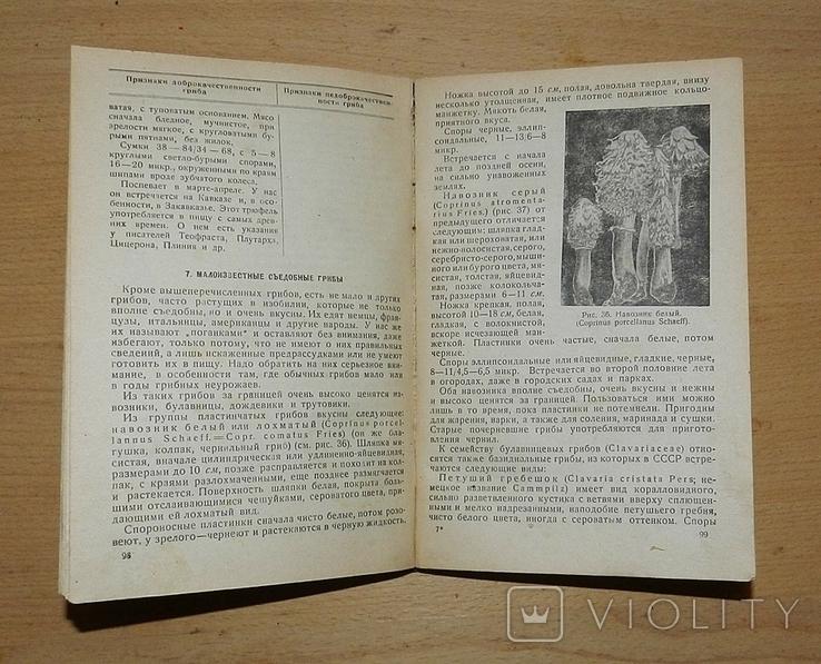 Н.И. Полевицкий. Грибной стол. 1933 г., фото №4