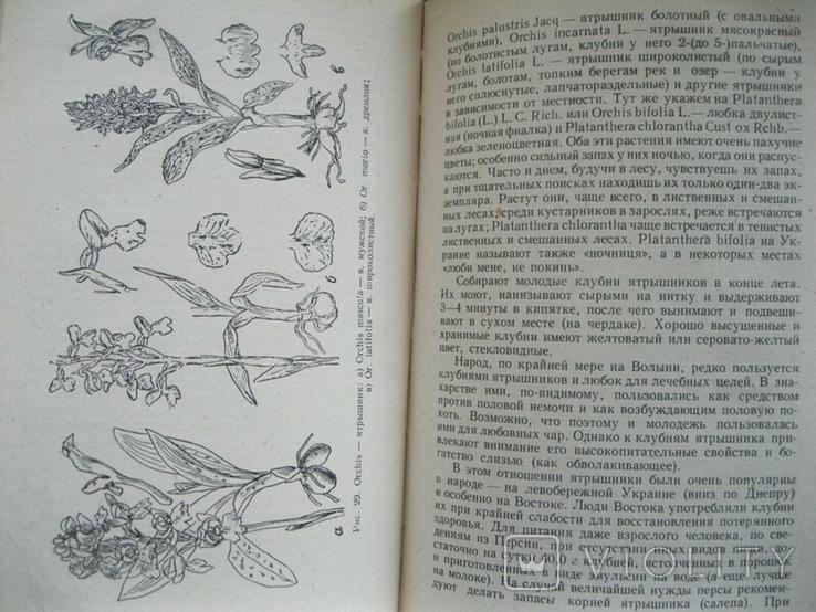 Лекарственные растения и способы их приминения в народе 1960г., фото №7