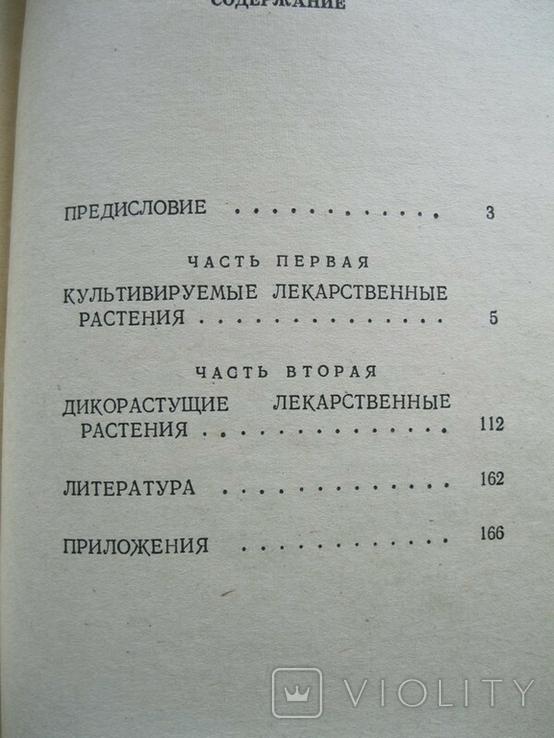 Культивируемые и дикорастущие лекарственные растения 1974г., фото №5