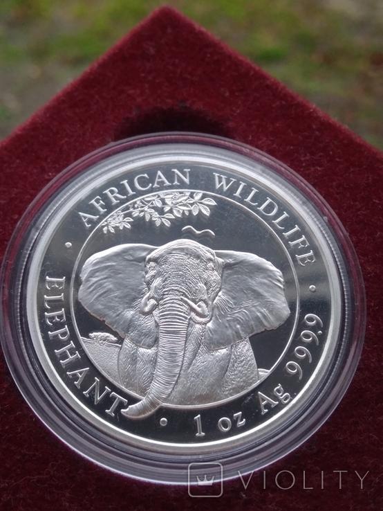 Серебро Слон Сомали 100 шиллингов 2021 г 1oz 999.9 пробы унция Африканский слон, фото №2