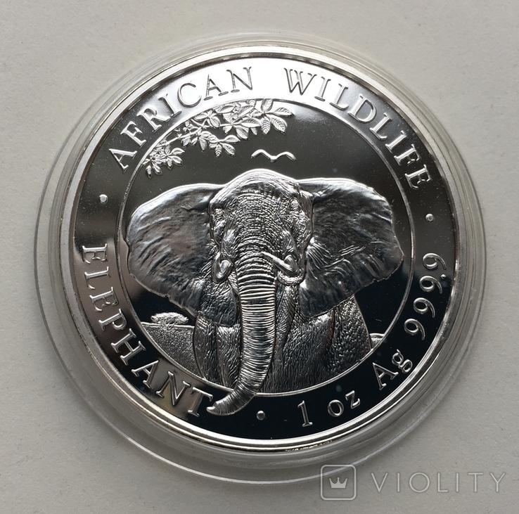 Слон Сомали 2021, фото №3
