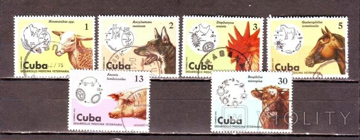 Куба. 1975г. Домашние животные