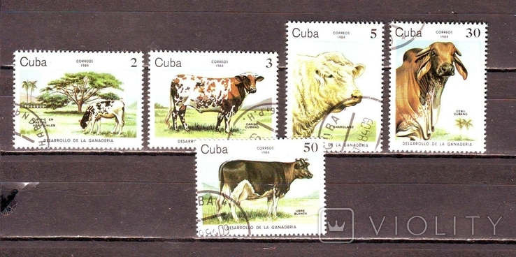 Куба. 1984г. Коровы
