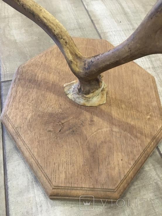 Вешалка рога, фото №6