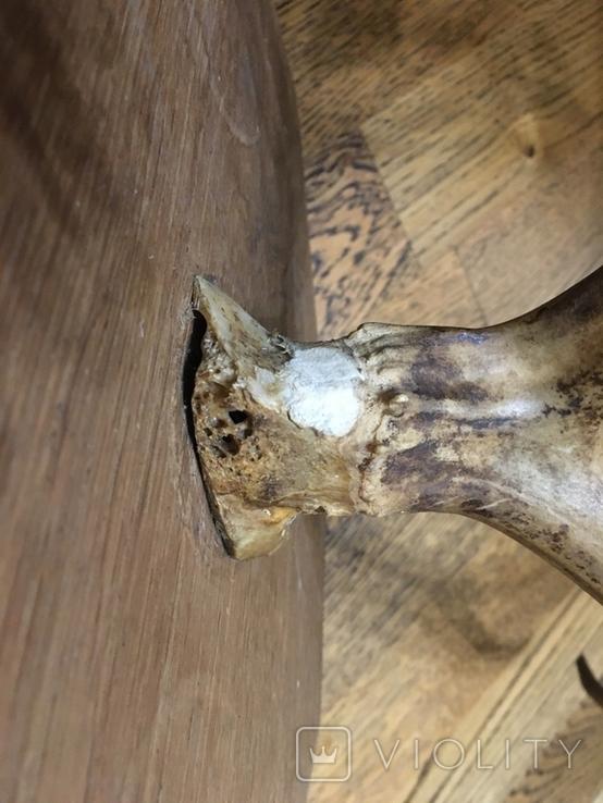 Вешалка рога, фото №13