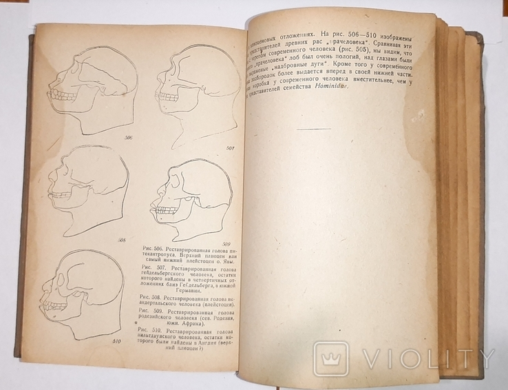 Палеонтология, Л.Ш. Давиташвили. 1933 год, фото №6