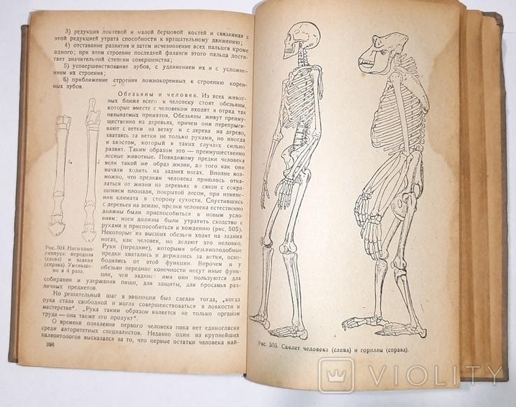 Палеонтология, Л.Ш. Давиташвили. 1933 год, фото №7