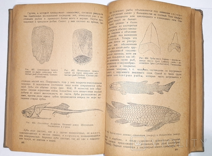 Палеонтология, Л.Ш. Давиташвили. 1933 год, фото №9