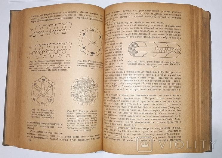 Палеонтология, Л.Ш. Давиташвили. 1933 год, фото №12