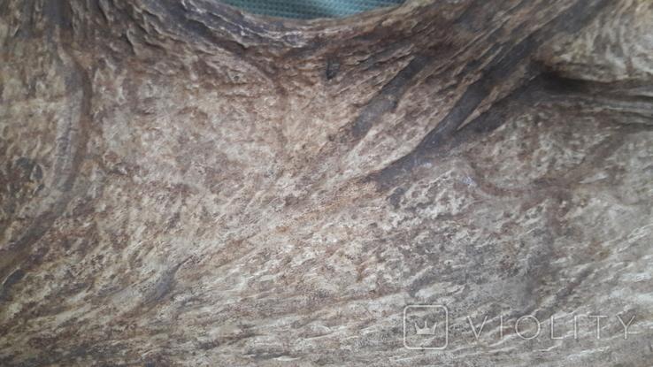 Рог оленя. Большой., фото №4