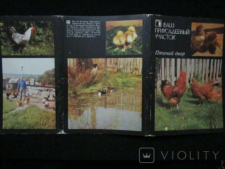 Комплект открыток СССР. Птичий двор. 1989г., фото №5