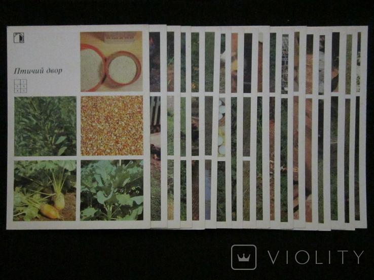 Комплект открыток СССР. Птичий двор. 1989г., фото №11