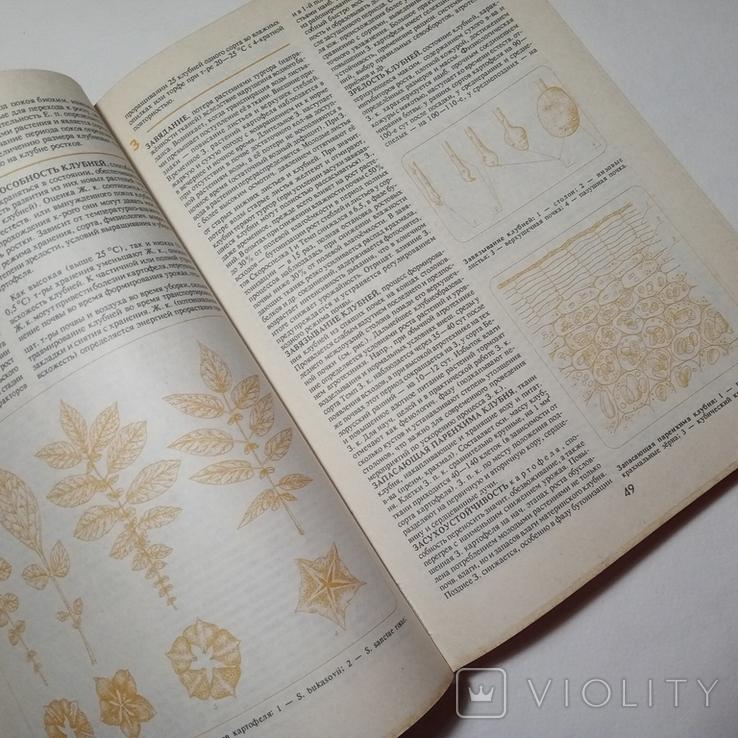1994 Бульба БЕЛАРУСКАЯ ЭНЦЫКЛАПЕДЫЯ (картофель, кулинария), фото №9