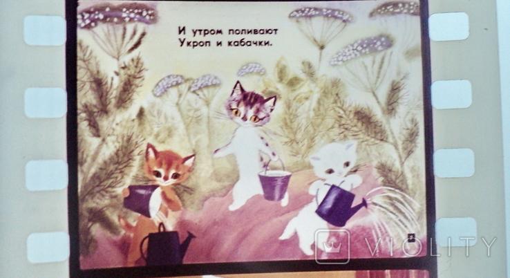 Касьянка,Том и Плут  диафильм, фото №6