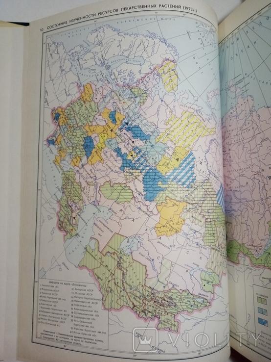1980 Атлас ареалов и ресурсов лекарственных растений СССР (большой формат), фото №6