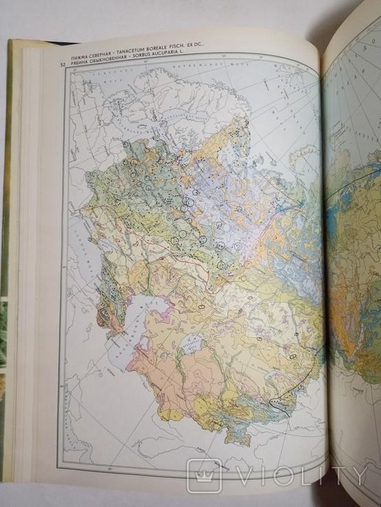 1980 Атлас ареалов и ресурсов лекарственных растений СССР (большой формат), фото №7
