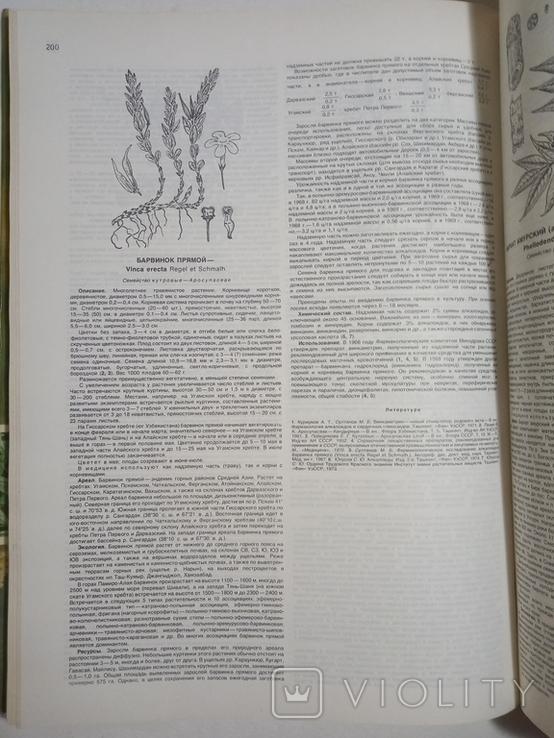 1980 Атлас ареалов и ресурсов лекарственных растений СССР (большой формат), фото №9
