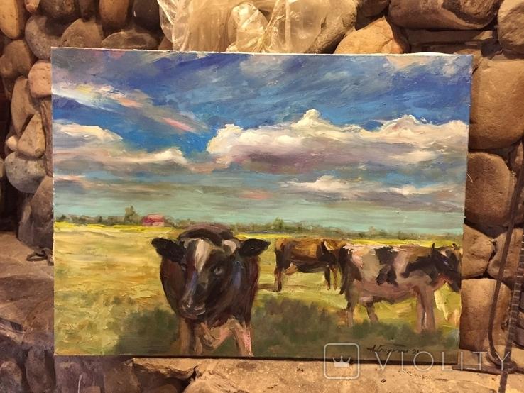 Коровы и облака масло холст 60/80, фото №4