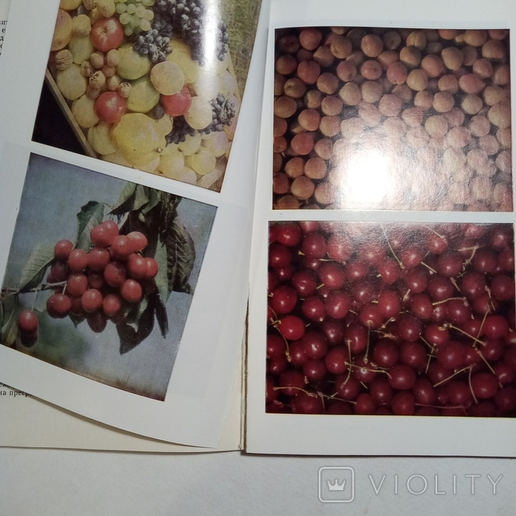 1983 Плодови и зеленчукови сокове и здраве, Даскалов П., фото №9