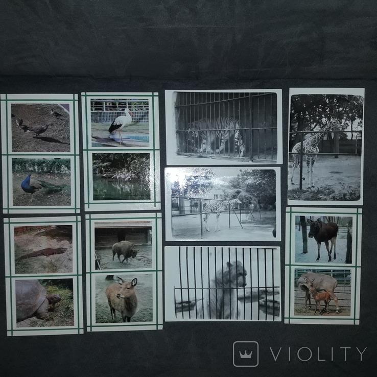 Київський зоопарк 1976, фото №4