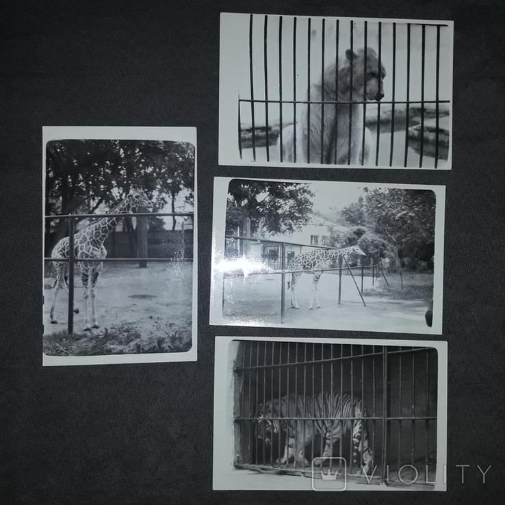 Київський зоопарк 1976, фото №8