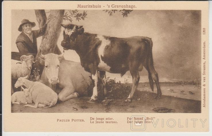 Молодой бык., фото №2