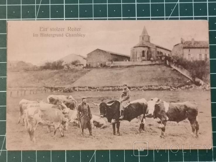 На быках, фото №2