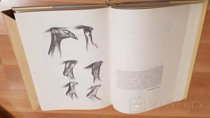 Анатомия для художников Ене Барчаи, фото №7