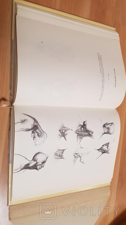 Анатомия для художников Ене Барчаи, фото №8