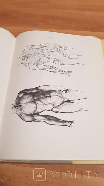 Анатомия для художников Ене Барчаи, фото №12