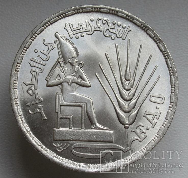 """1 фунт 1976 г. Египет """" ФАО """", серебро, фото №2"""