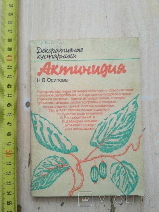 """Осипова """"Актинидия"""" 1987р., фото №2"""