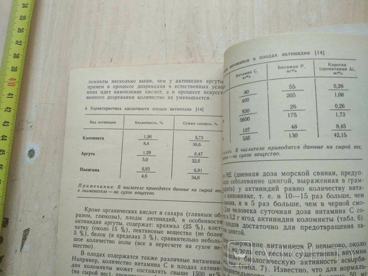 """Осипова """"Актинидия"""" 1987р., фото №6"""