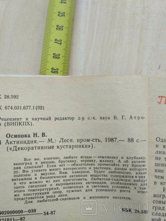 """Осипова """"Актинидия"""" 1987р., фото №9"""