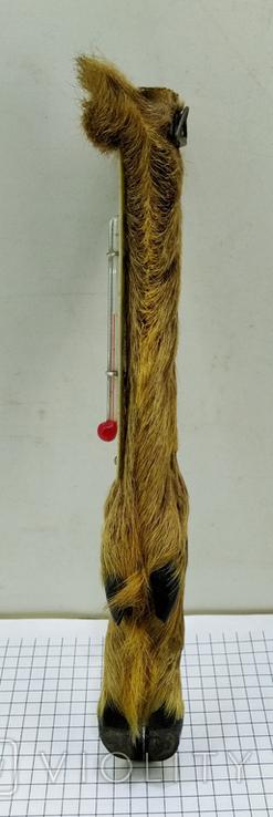 Термометр козья ножка ГДР Германия GDR, фото №7