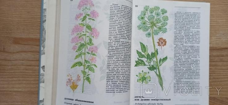 А. Кощеев Дикорастущие съедобные растения в нашем питании, фото №5
