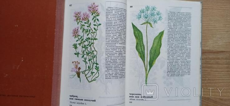 А. Кощеев Дикорастущие съедобные растения в нашем питании, фото №6