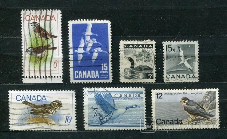 Канада, фауна, птицы, (подборка)