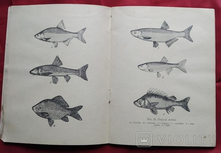 Ловля рыбы на кружки.1965г, фото №7