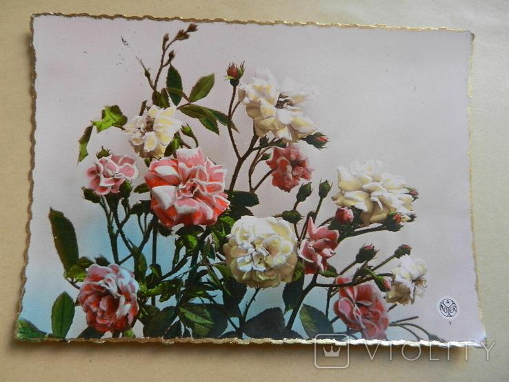 Розы, фото №2
