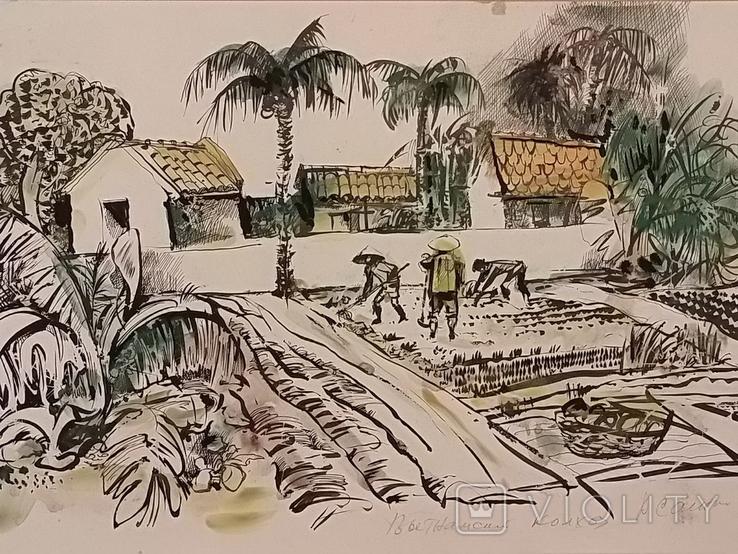 Вьетнамские колхозы.1985 год., фото №3