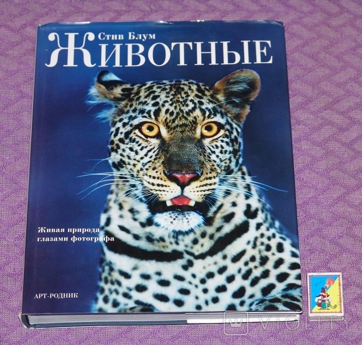 Животные. Живая природа глазами фотографа., фото №2