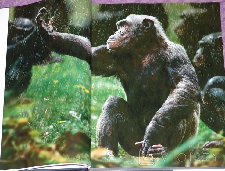 Животные. Живая природа глазами фотографа., фото №5