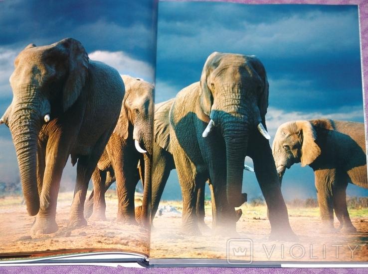 Животные. Живая природа глазами фотографа., фото №6