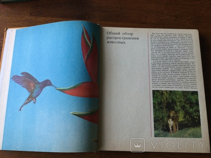 Животный мир земли У. Зедлаг 1975 г, фото №5
