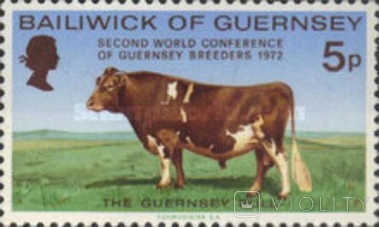 Гернси 1972 быки, коровы